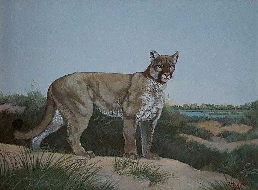 SOLD Puma by Carlos Montefusco