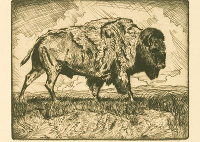 Buffalo by Phil Epp