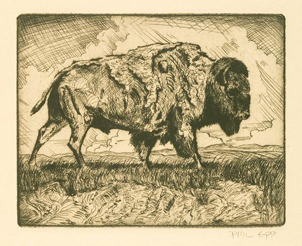 Buffalo by Phil Epp