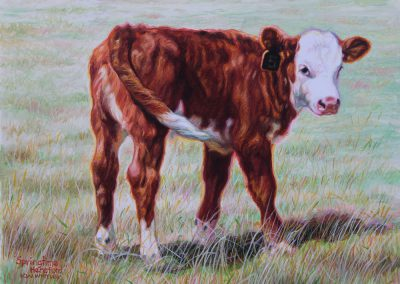 Springtime Hereford by K. W. Whitley – SOLD