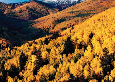Autumn Aspens, Sangre de Cristo Mountains, New Mexico