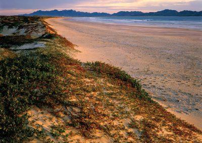 Iceplant, Magdalena Island, Pacific Ocean, Baja California Sur, Mexico