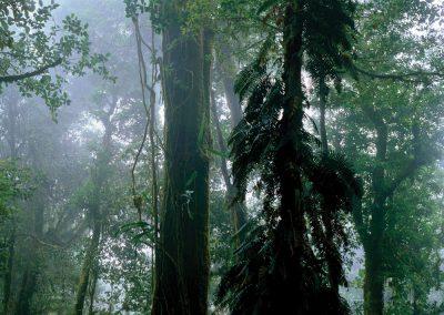 Oak, Fig, Fern, Cactus, Cloud Forest, Sierra Madre Occidental, Chiapas, Mexico