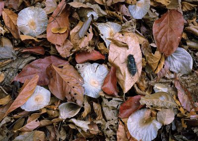 Paper Seeds, Leaves, Cicada, Sierra Madre Occidental, Chiapas, Mexico