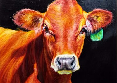Red Calf by KW Whitley – SOLD