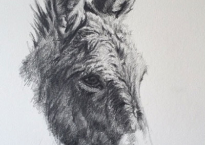 SOLD Burro by Tyler Crow