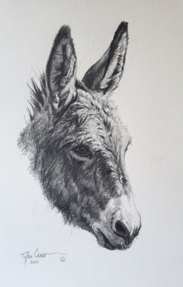 Burro by Tyler Crow