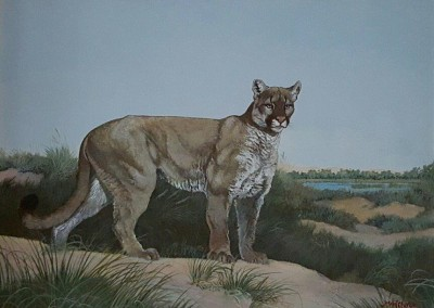 SOLD Puma by Carlos Montefusco