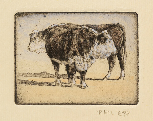 Bulls by Phil Epp