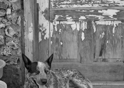 Buddy the Ranch Dog