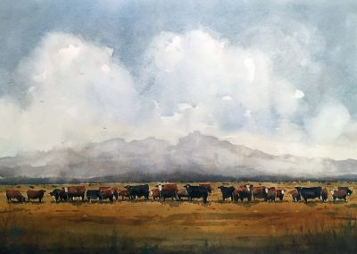 Fat Cows on Rancho Espuela Grass by Tim Oliver – SOLD