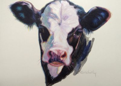 Calf Study by KW Whitley